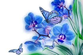 15 spectacular butterfly on flower images hd morewallpapers com