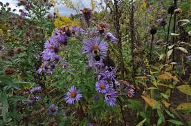 218 best native plants images pollinators nrcs new hampshire