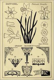 daffodil patterns in monumental drawing and lettering the