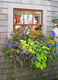 Plant Combination Ideas For Container Gardens - 135 best garden ideas images on pinterest gardening landscaping