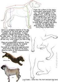 Dog Body Parts Anatomy Dog Skeleton Anatomy By Thedragonofdoom On Deviantart Animalia