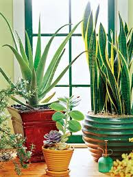 Tropical House Plants Names - 24 of the easiest houseplants you can grow