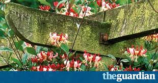 Climbing Plants For North Facing Walls - gardens five ways with scented climbers life and style the