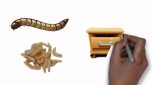 pantry moth infestation youtube