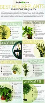 best plants for air quality air purifying houseplants infographic bob vila