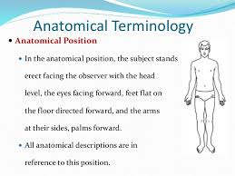 What Is Human Anatomy And Physiology 1 Chapter 1 Introduction To Anatomy And Physiology