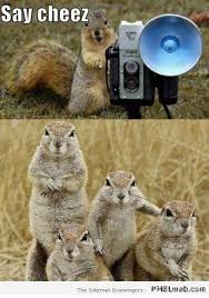 Rodent Meme - 12 funny rodents say cheese meme pmslweb