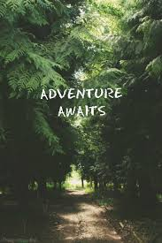 quote from jungle book words quotes saying tree forest road adventure photography