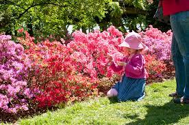 Botanical Gardens Images by Osborne Garden Brooklyn Botanic Garden