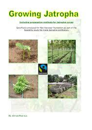 jatropha wikipedia calaméo growing jatropha curcas including propagation methods