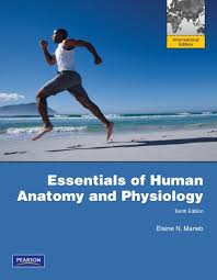 Human Anatomy And Physiology Textbook Online Just Another Anatomy And Physiology Site Anatomy And Physiology