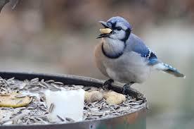 lehigh valley experts offer tips on feeding backyard birds the