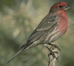 Ontario Backyard Birds Kfn Winter Bird Feeding Blue Bill Article