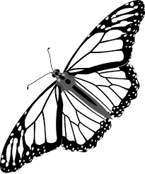 butterfly monarch insect free vector graphic on pixabay