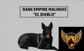 belgian shepherd houston dark empire