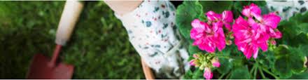 rose u0026 flower gardening miracle gro