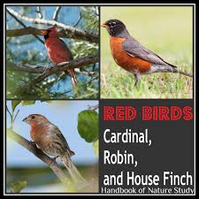 outdoor hour challenge red birds robin cardinal and house finch