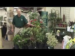 beginners vegetable gardening how to garden in pots on your deck