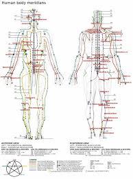human body meridian chart u0026 the nervous system human body