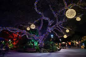 zoo lights houston prices zoo lights kid 101