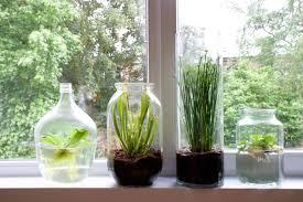 tiny indoor gardens yayzine