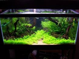 Substrate Aquascape Adventures In Aquascaping