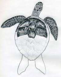 coloring attractive drawings turtles coloring