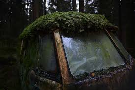 vw schwimmwagen found in forest https www facebook com photo php fbid 1179640175381664 derelict