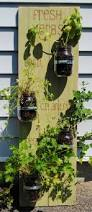 best 25 hanging herb gardens ideas on pinterest small plastic