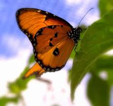the butterfly farm oranjestad all you need to before you