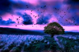 live hd themes for pc field pink sky blue stormy birds flight twilight clouds live