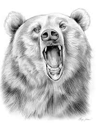 25 trending grizzly bear drawing ideas on pinterest bear