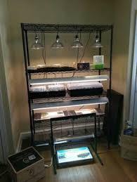 shop light for growing plants grow light setup f n cooperation pinterest grow lights seed