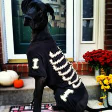 pics of happy halloween happy halloween from the motherhood pets the motherhood a