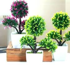 Best Plant For Office Desk Flowers For Office Desk Design Small Plant Great Plants Best