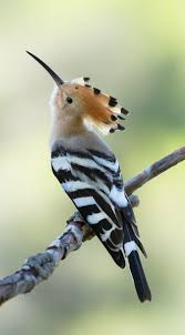 139 best birds images on pinterest animals beautiful birds and