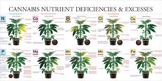 12 Best Plants That Can by Nutrients That Will Give Your Plants The Ultimate Yield