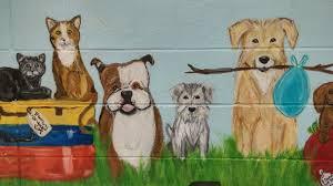 animal control division and shelter allen tx official website allen animal shelter 1