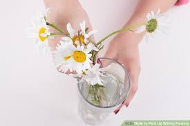 How To Make Roses Live Longer In A Vase 3 Ways To Perk Up Wilting Flowers Wikihow