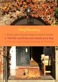 puppy thanksgiving happy dogthanking bodie on the road