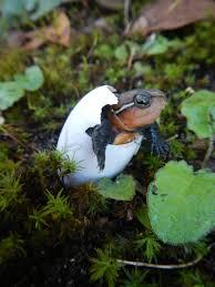 by species turtle survival alliance tsa