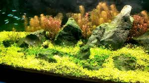 Aquascape Shop 4feet Fish Tank 3 Nature Aquascaping Surat Aquarium Shop In