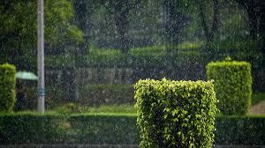 imagenes de paisajes lluviosos parque lluvioso 1920x1080 fondos de pantalla y wallpapers