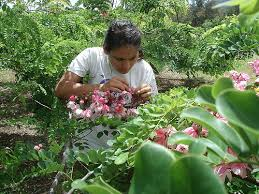Tropical Plant Diseases - curriculum tropical plant and soil sciences