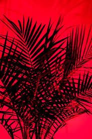 Red Colour Shades 171 Best Color Black U0026 Red Images On Pinterest Color Black Red