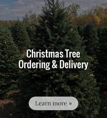 christmas tree delivery boston christmas tree delivery s best fish local