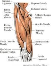 The Human Anatomy Muscles Pinterest U2022 The World U0027s Catalog Of Ideas