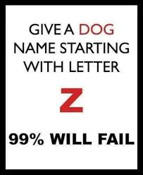 give a dog name starting with letter z watch or download