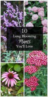 blooming plants 10 long blooming plants you ll love