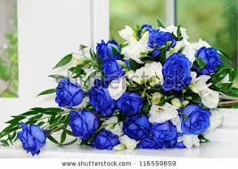 white and blue roses brides bouquet blue white roses stock photo 116559859